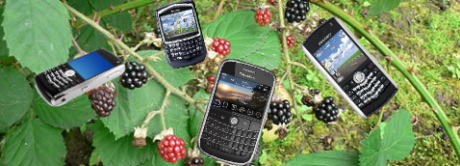 Blackberry-bush-phone-garden-zaw2