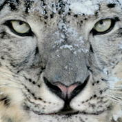 Will your Mac boot 64-bit Snow Leopard by default? Not unless it's an Xserve